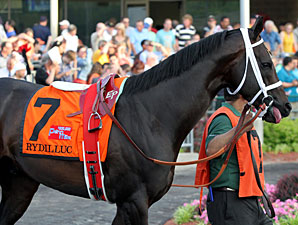 Rydilluc wins the 2013 Penn Mile.