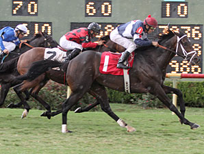 Sadie's Soldier wins the 2012 Louisiana Cup Turf Classic.