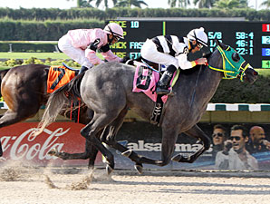 Salamera wins the 2012 J J'sdream Stakes.
