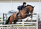 Sam P in his second career at a Charity Horse Show.