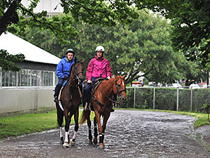 Samraat at Belmont Park on June 5, 2014.