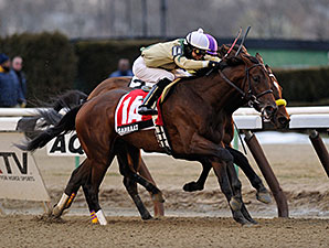 Samraat wins the 2014 Gotham Stakes.