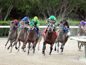 Scandalous Act wins the 2013 Florida Stallion Stakes Susan's Girl Division