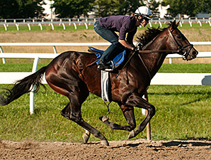 Scipio works towards the Breeders' Stakes.