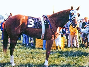 Secretariat at the 1973 Preakness