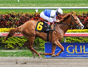 Shackleford Allowance win 02/05/11.