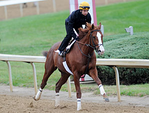 Shackleford - Churchill Downs, Oct 28, 2011.