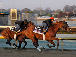 Shackleford - Churchill Downs, Oct 29, 2011.