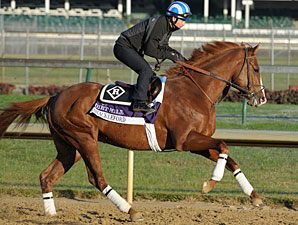 Shackleford - Churchill Downs, Nov 1, 2011.
