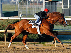 Shackleford - Churchill Downs 11/17/2012.