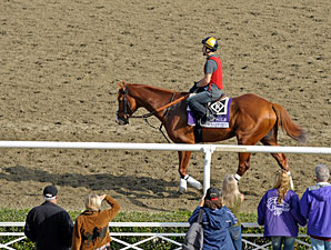 Shackleford - Breeders' Cup 2012.