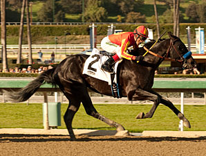 Shakin It Up wins the San Vincente Stakes.