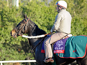 Shareta - Breeders' Cup 2012