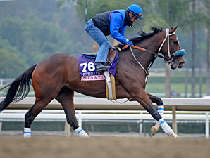 She's a Tiger - Breeders' Cup 2013, October 25, 2013.