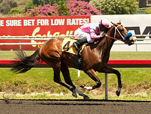 She's a Tiger wins the 2013 Landaluce.