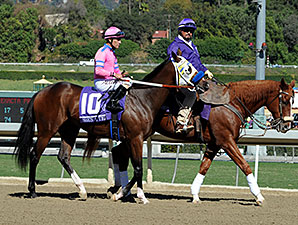 She's a Tiger Breeders' Cup 2013 Post Parade