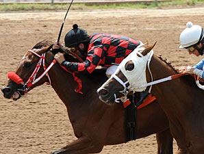 She's Prado's Idol wins the 2012 Louisiana Cup Oaks.