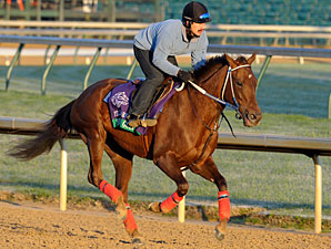 Shotgun Gulch, Churchill Downs, Nov 1, 2011.