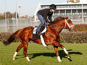 Sidney's Candy jogs at Churchill Downs 10/25/2011.