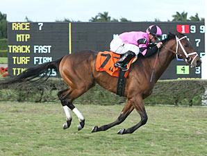 Silver Medallion wins the 2011 Tropical Turf Handicap.