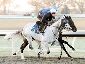 Silver Timber works at Keeneland on October 30, 2010.