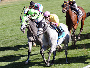 Silver Timber wins the 2010 Woodford.