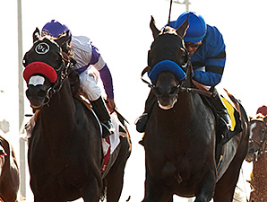 Sky Kingdom wins the 2014 American Flag Stakes.