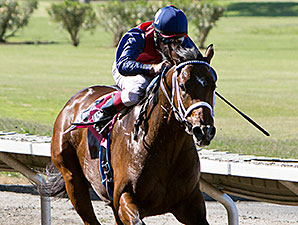 Skydreamin wins the 2013 Everett Nevin Stakes.