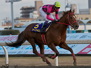 Smart Falcon in the Kawasaki Kinen.