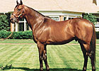 Smart Strike: Leading Sire