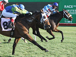 Smarty B wins the 2013 Glendale Handicap.