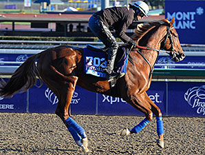 Smarty's Echo gallops at Santa Anita. Breeders' Cup 2013