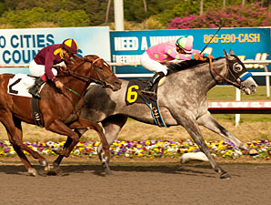 So Brilliant wins the 2011 Hollywood Prevue.