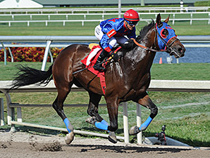 Social Inclusion wins an allowance race at Gulfstream Park.
