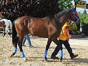 Social Inclusion heads towards the paddock for the Preakness.