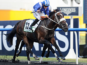 Soft Falling Rain wins the 2013 Godolphin Mile.