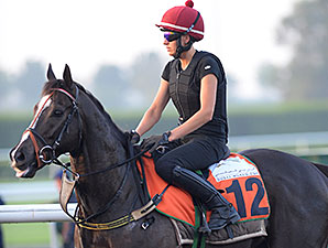 Sole Power, Dubai 2014