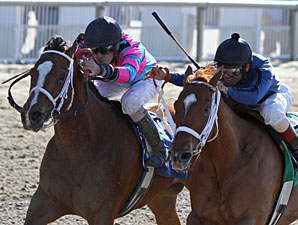 Speedacious (turquoise and pink silks) and Inspired dead heat in the Happy Ticket Stakes.