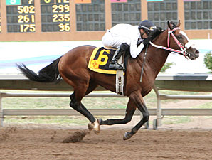 Spinning Touch wins the 2012 Lineage Stakes.