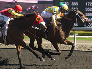 Spring in the Air wins the 2013 Fury Stakes.