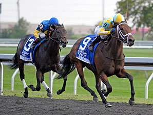Spring in the Air wins the 2012 Darley Alcibiades.