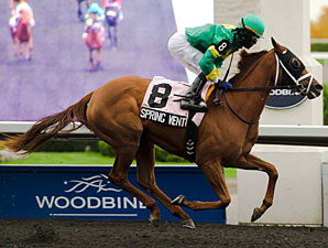 Spring Venture wins the 2012 Mazzarine.