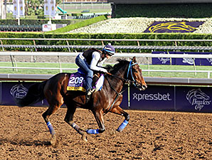 Stanwyck - Breeders' Cup 2014