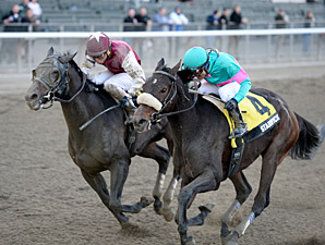 Stanwyck wins the 2013 Turnback the Alarm Handicap.