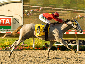 Stardom Bound wins the 2008 Del Mar Debutante.