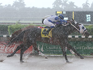 Starship Valor wins the 2010 Champali.
