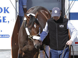 Stay Thirsty arrives at Churchill Downs on April 7, 2011.