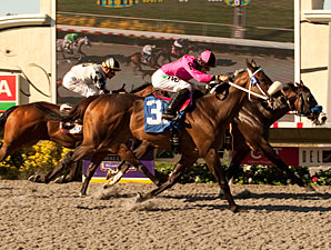 Sterling Outlook (inside) and Mensa Heat deadheat in the 2011 Pirate's Bounty.