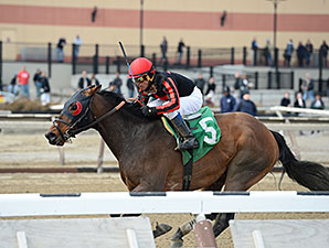 Stormin Monarcho wins the 2015 Mr. Sinatra Stakes.