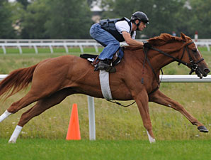 Stormy Lord at Woodbine on August 12, 2010.